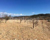 Land in Murcia (30)