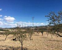 Land in Murcia (32)