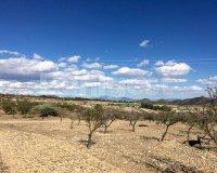 Land in Murcia (33)