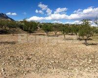 Land in Murcia (34)