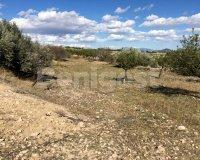 Land in Murcia (35)