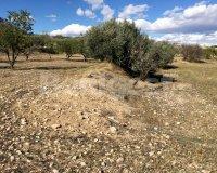 Land in Murcia (36)