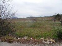 Farmhouse, Bodega and urban land