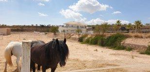 Equestrian Dreams