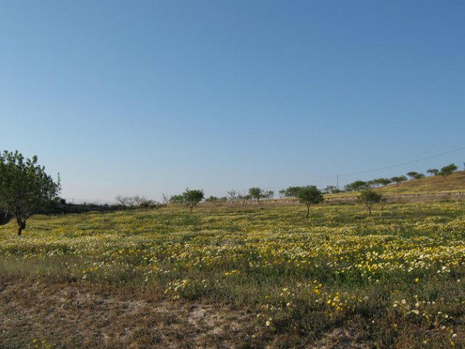 LP 123 35,000m2 plot of land, Cartagena