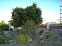 Fully legal 3 bedroom Villa in Callosa del Segura (47)