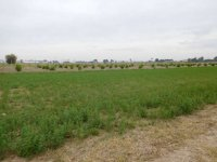Plot of land for a mobile home, in Dolores for rent. (1)