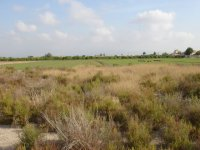 12,000m2 land, Catral (2)