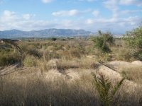 land plot, Crevillente (0)
