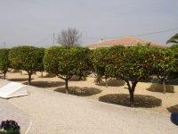 RS 544 Madriguera villa, Catral (1)