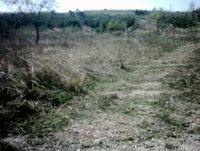 LP 122  3 land plots in Zarzadilla de Totana (1)