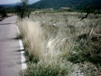 LP 122  3 land plots in Zarzadilla de Totana (2)