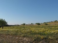 LP 123 35,000m2 plot of land, Cartagena (0)