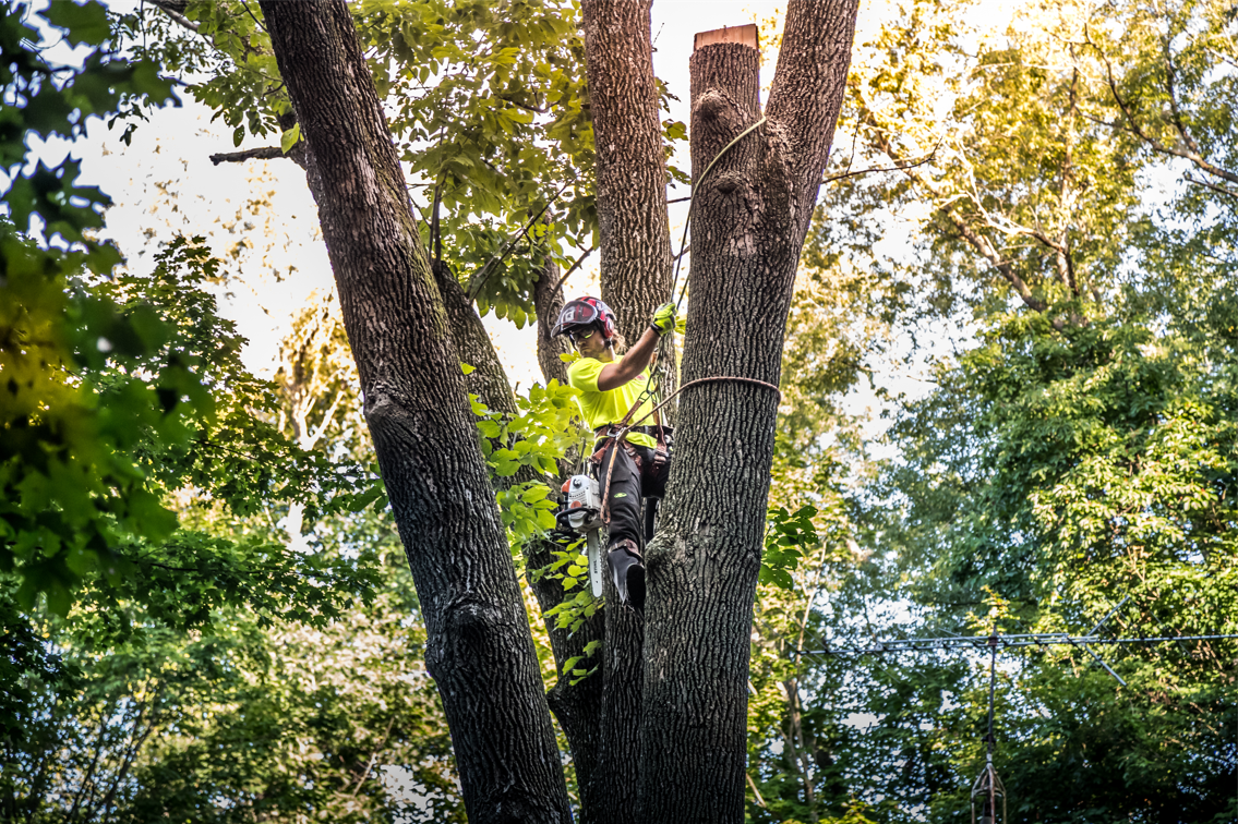 Top Apps for Tree Care Professionals