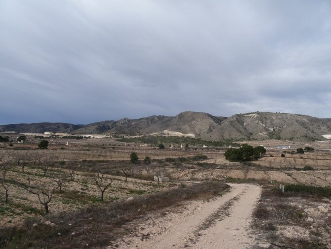 Almond Finca - Great Price Reduction