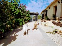 Detached luxury country villa with successfully fully licensed dog boarding kennels  (30)