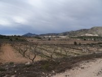 Almond Finca - Great Price Reduction (11)