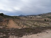 Almond Finca - Great Price Reduction (8)
