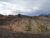 Almond Finca - Great Price Reduction (10)