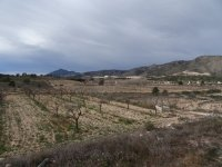 Almond Finca - Great Price Reduction (4)