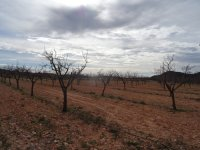 Almond Finca - Great Price Reduction (14)