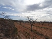Almond Finca - Great Price Reduction (15)