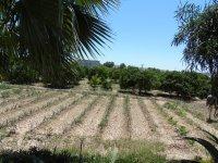 Plot in Rojales (1)
