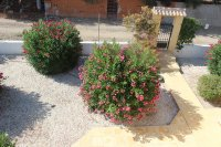 Two bed finca with private pool, stunning views and separate 1 bed accommodation  (39)