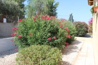 Two bed finca with private pool, stunning views and separate 1 bed accommodation  (41)