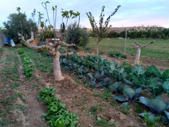 Ref:410316 Land For Sale in Benijófar