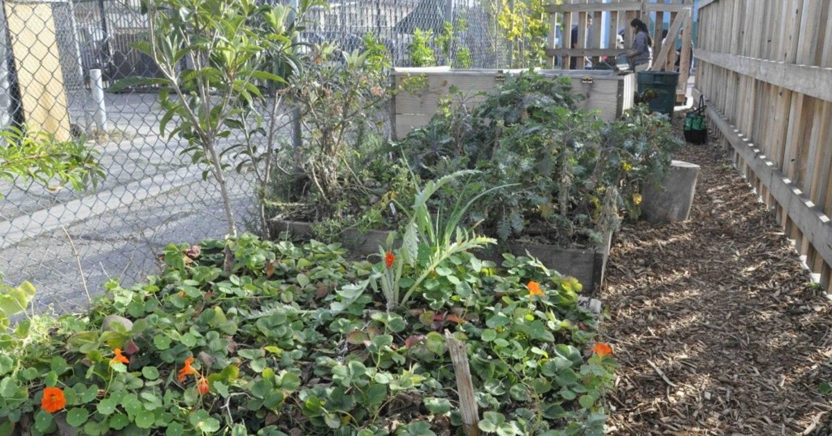 MEND's Urban Farming in Pacoima project