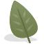 leaf framework