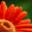 java-image-scaling