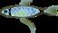 Fish shell
