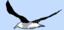 Albatross2D