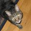 Feisty Meow Codebase