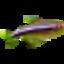 Nyagua