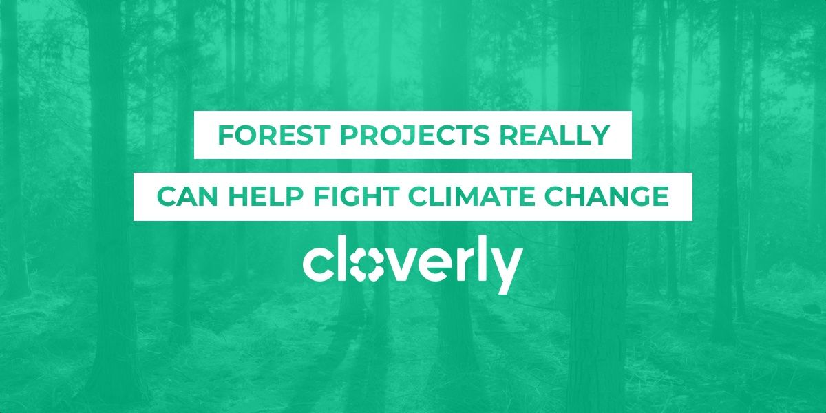 Forest projects really can help fight climate change