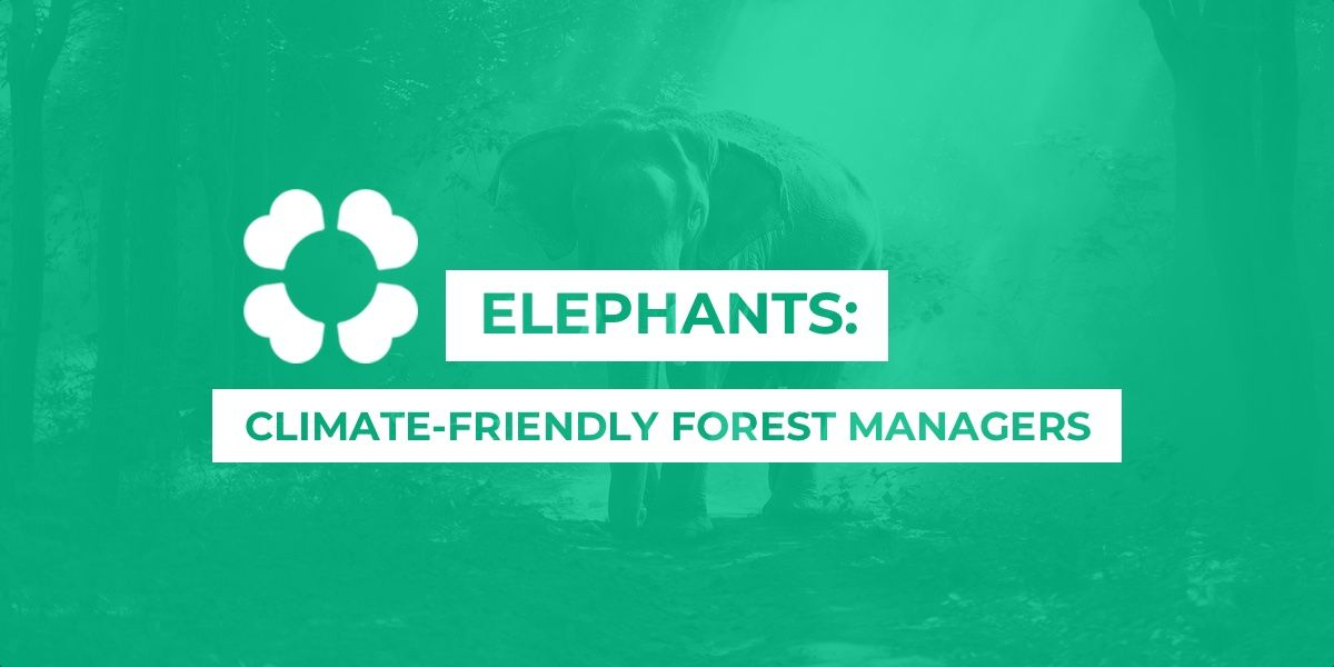Elephants: climate-friendly forest managers