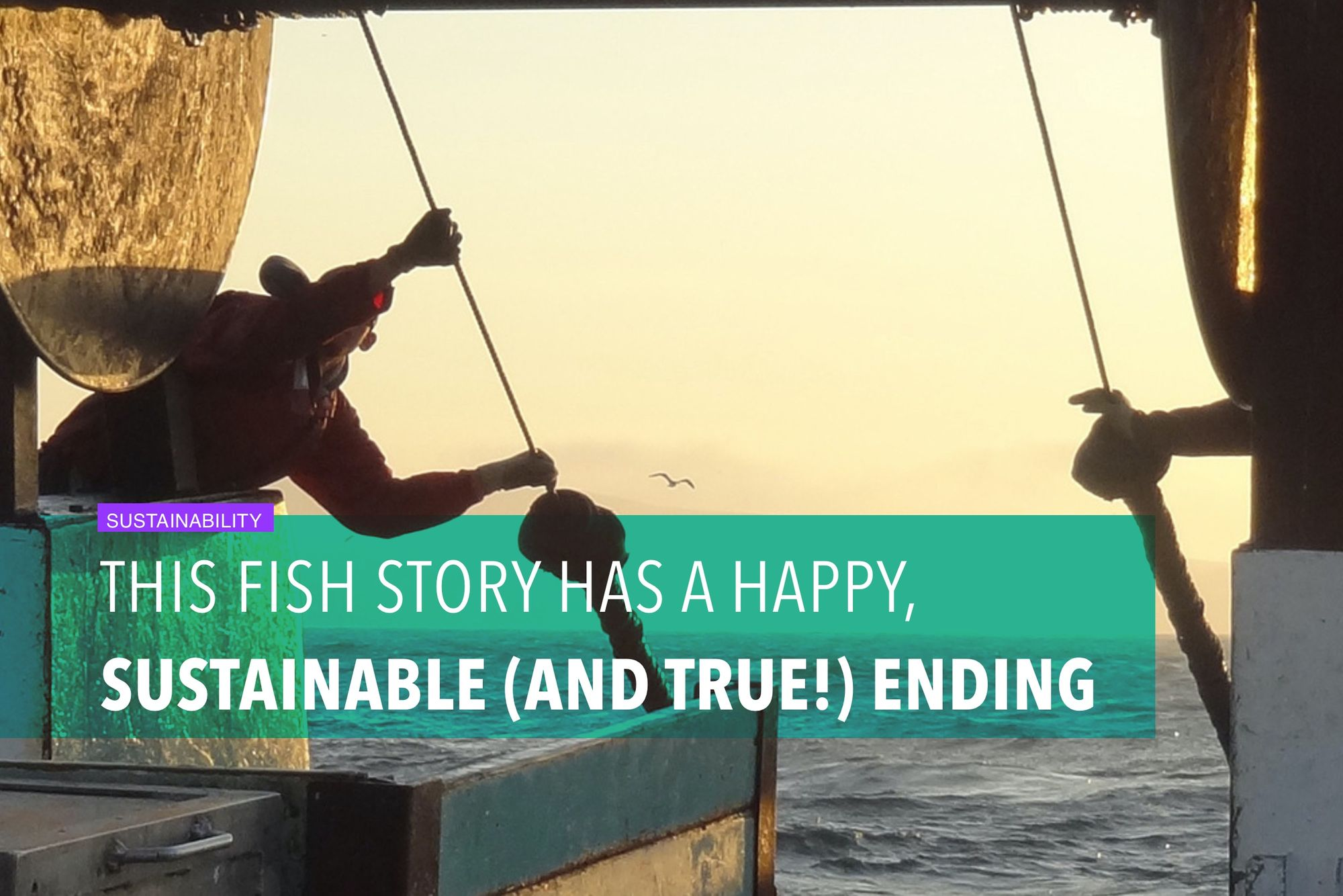 This fish story has a happy, sustainable (and true!) ending