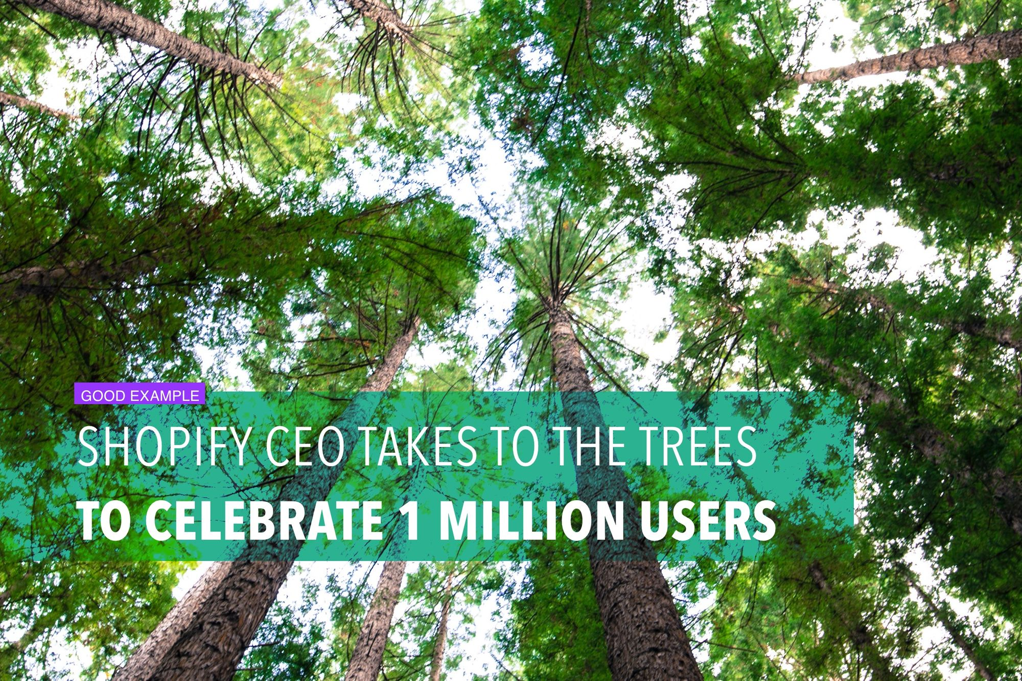 Shopify CEO takes to the trees to celebrate 1 million users
