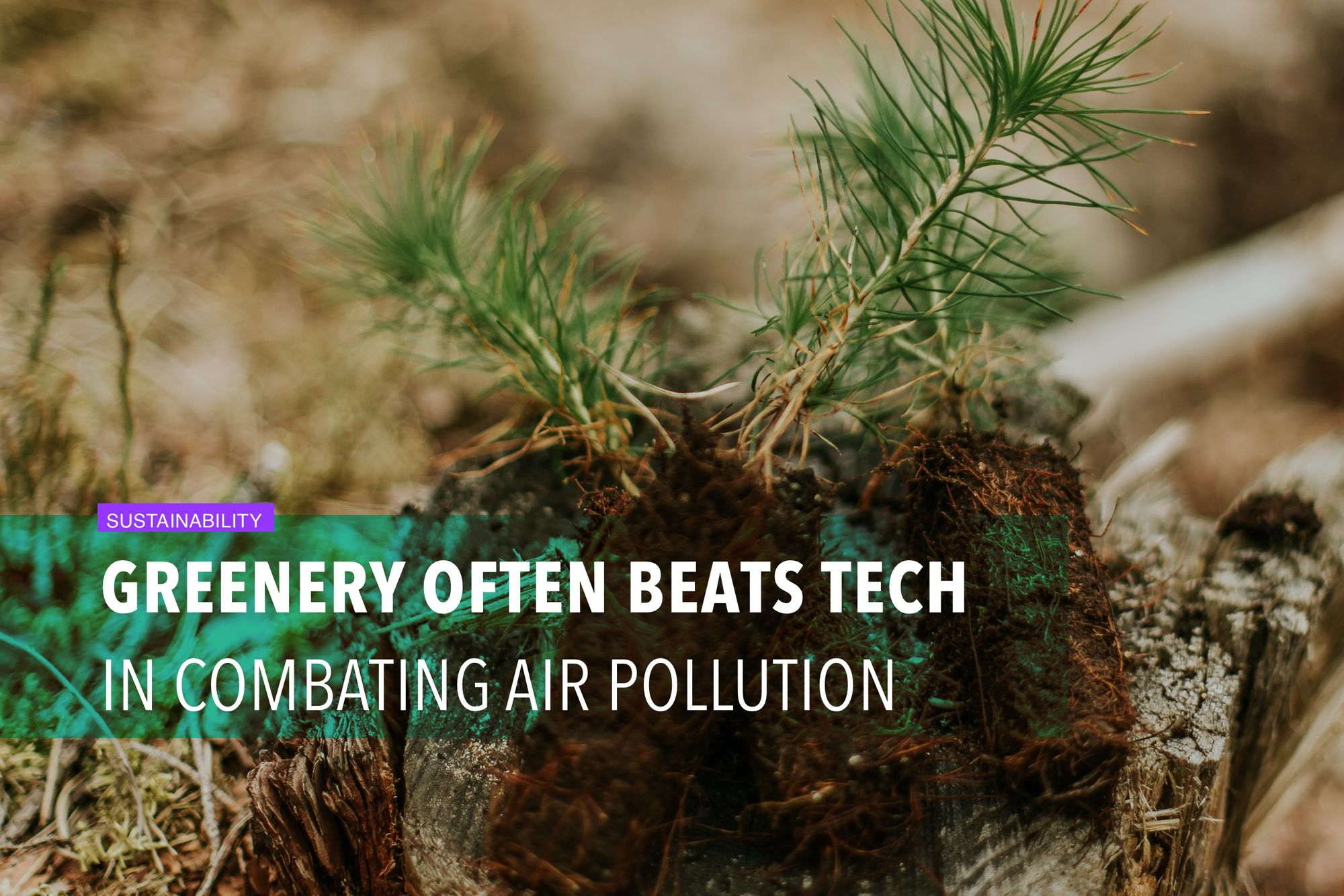 Greenery often beats tech in combating air pollution
