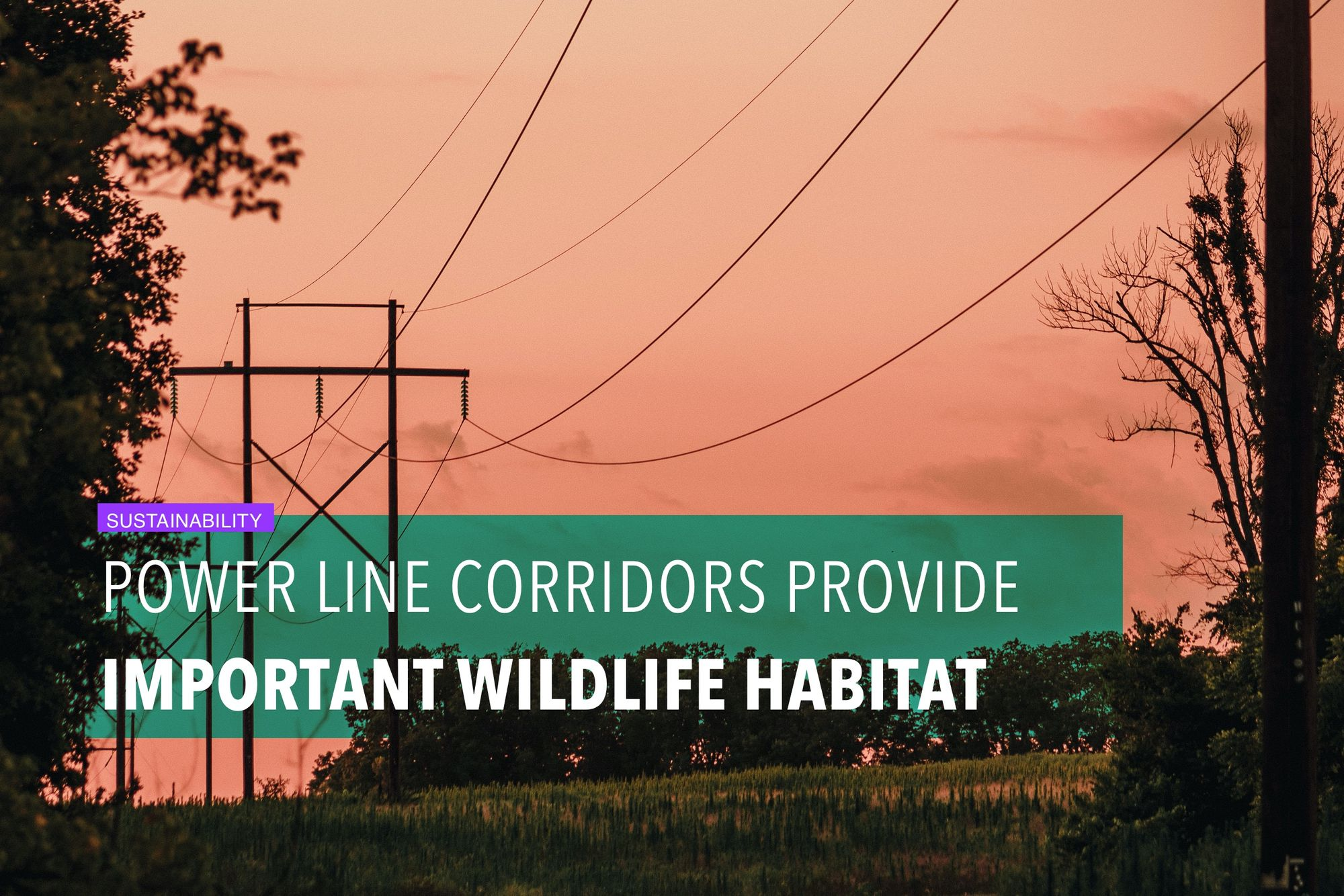 Power line corridors provide important wildlife habitat