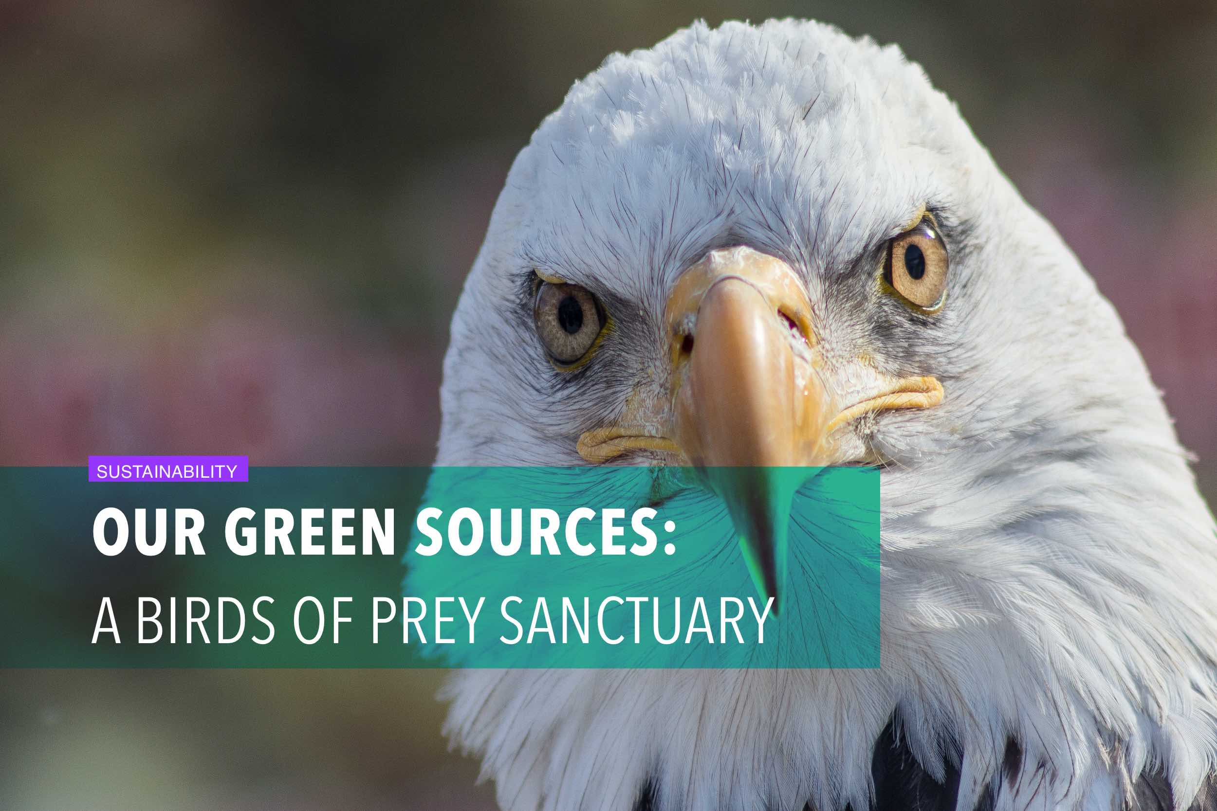 Our green sources: A birds of prey sanctuary
