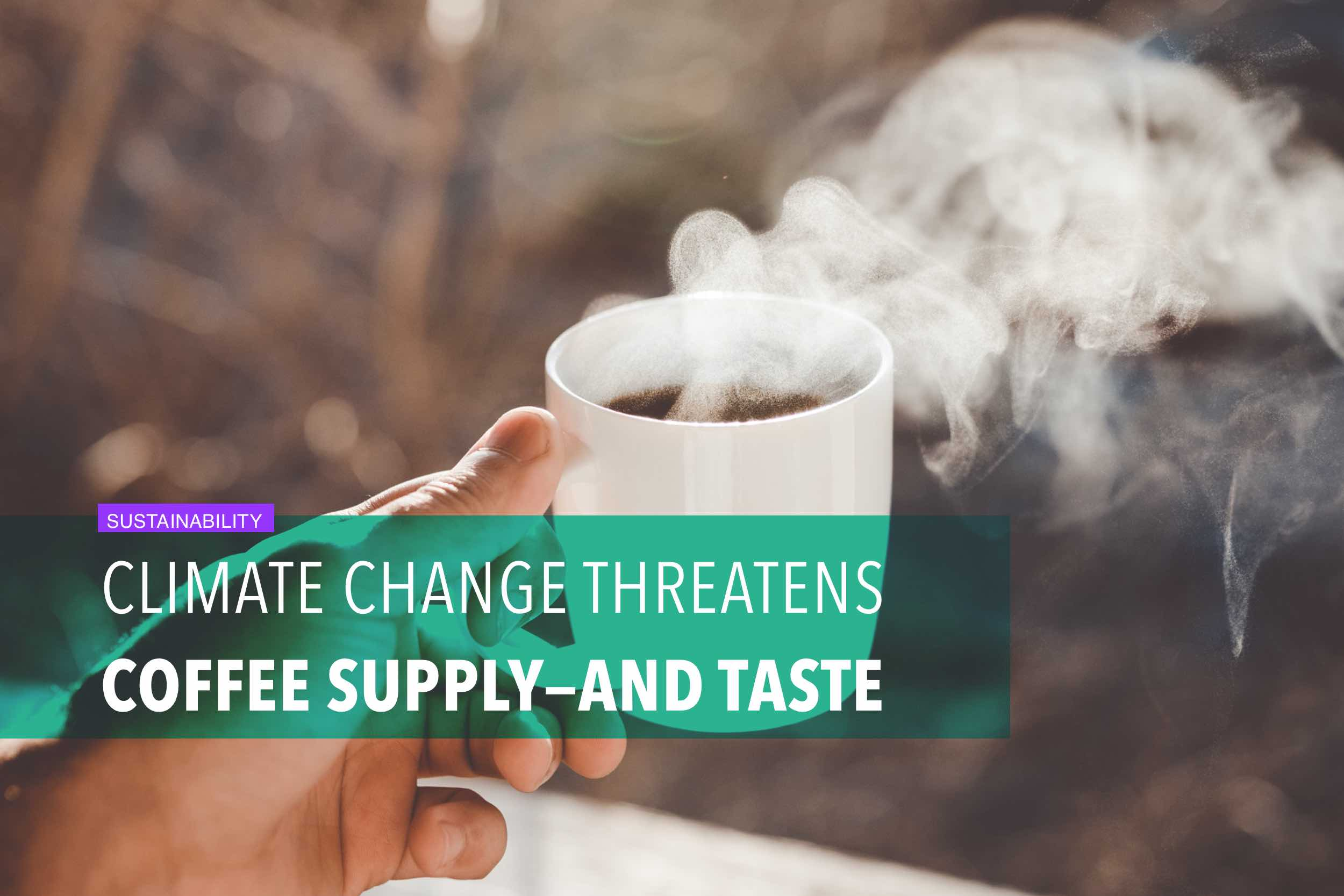 Climate change threatens coffee supply—and taste