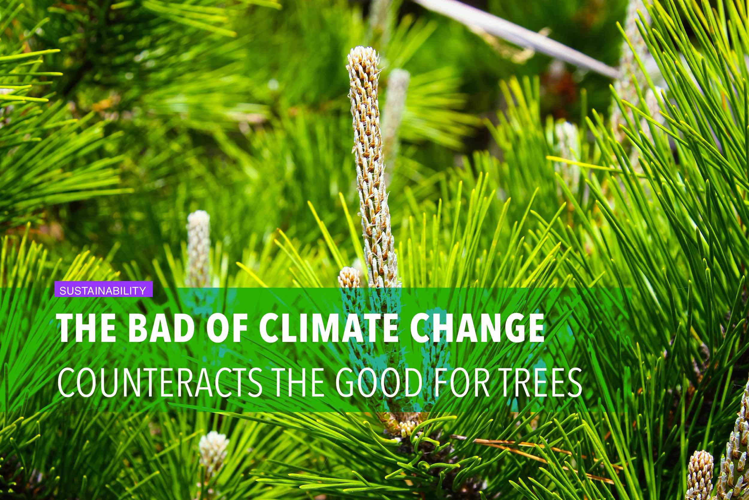 The bad of climate change counteracts the good for trees