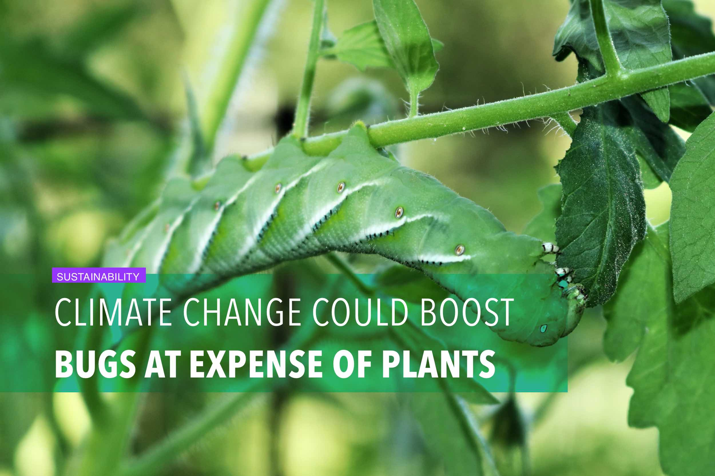 Climate change could boost bugs at expense of plants