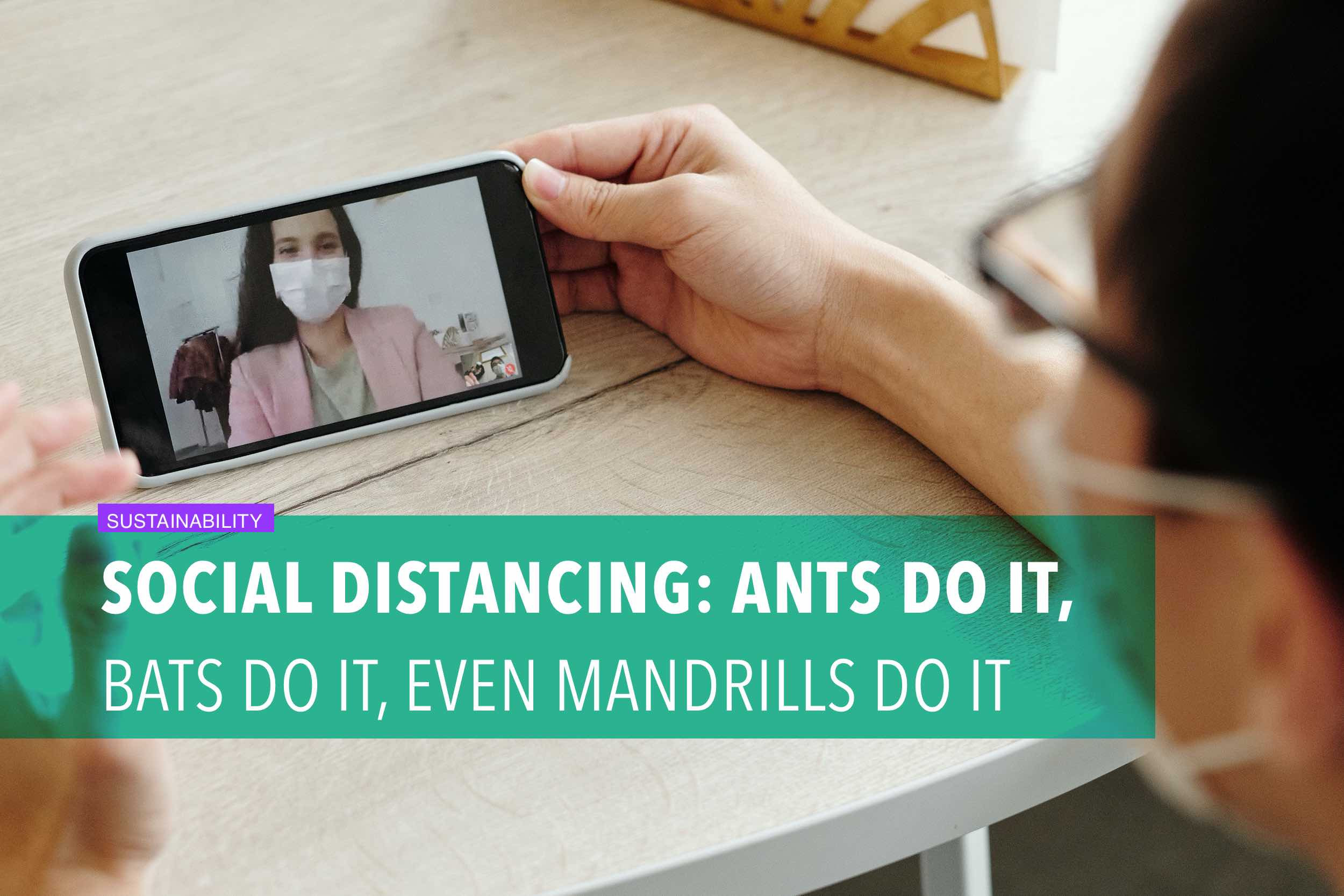 Social distancing: ants do it, bats do it, even mandrills do it