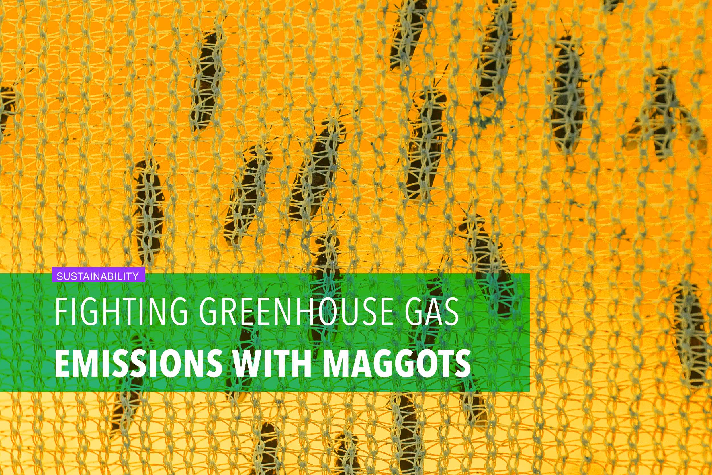 Fighting greenhouse gas emissions with maggots