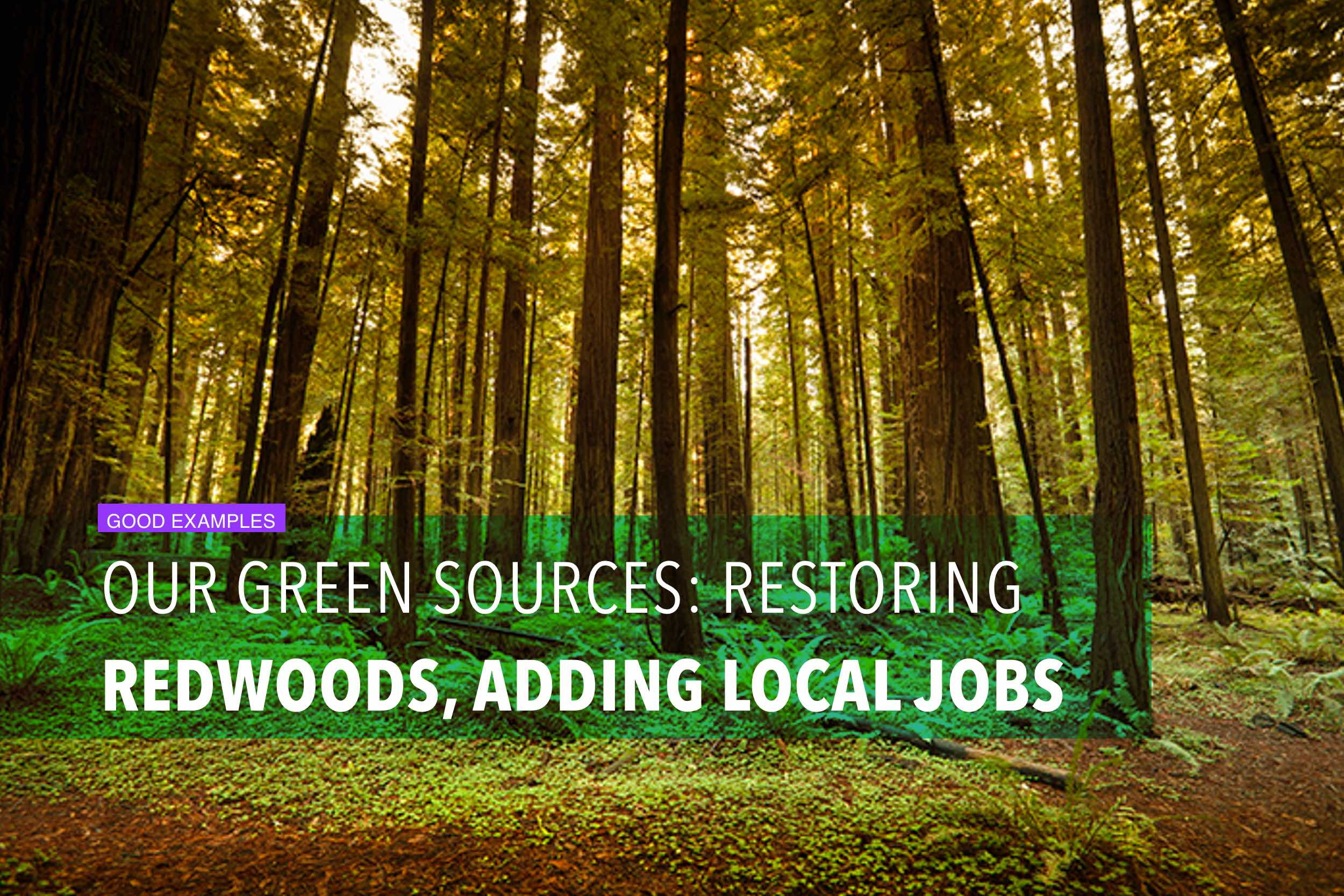 Our green sources: restoring redwoods, adding local jobs